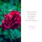 « Ce qui sépare les gens - Citation sur l'amour » par beauxproverbes