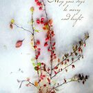 Red Barberries Holiday Card by LouiseK