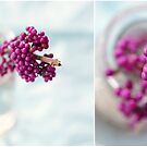 BEAUTY BERRY by Bloom by Sam Wales