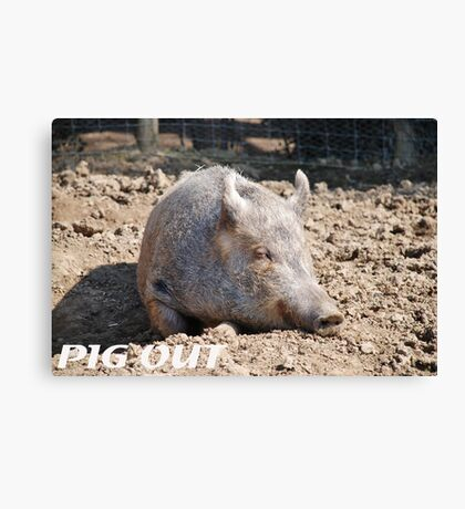 Pig in mud with pig out slogan Canvas Print