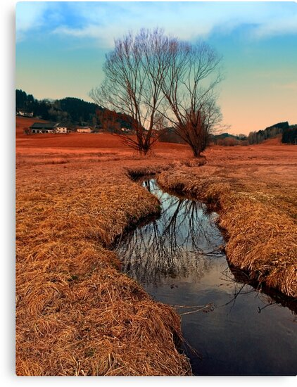 A stream, dry grass, reflections and trees   waterscape photography by Patrick Jobst