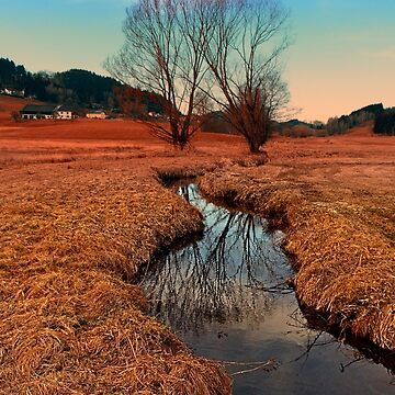 A stream, dry grass, reflections and trees | waterscape photography by patrickjobst