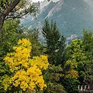 Flatirons Fall Silhoette by Gregory J Summers