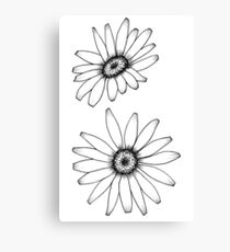 Daisy Drawing Canvas Print