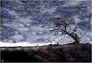 California Oak by Wayne King