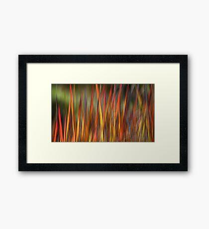 Wild Grass Framed Print