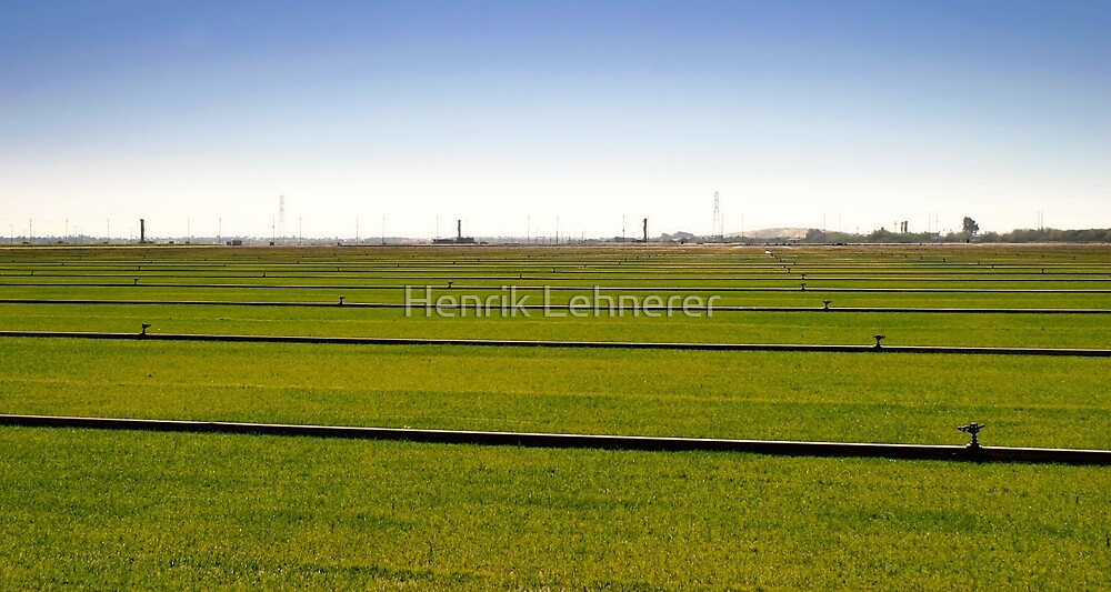 Where The Grass Is Growing by Henrik Lehnerer