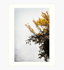 Fagus in Fog Art Print