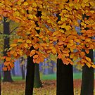 Top selling . Views:23572 ♥.  Forever Autumn   . Eye-catcher - For Sure ! Fav: 76.  Thx friends ! muchas gracias !!! This image Has Been S O L D . Buy what you like!  by © Andrzej Goszcz,M.D. Ph.D