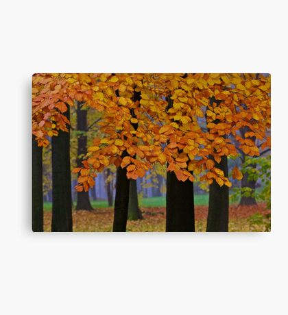 Top selling . Views:23572 ♥.  Forever Autumn   . Eye-catcher - For Sure ! Fav: 76.  Thx friends ! muchas gracias !!! This image Has Been S O L D . Buy what you like!  Canvas Print