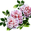 Three Pink Roses With Leaves by Susan Savad