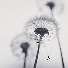 Dandelion Wishes by Bloom by Sam Wales