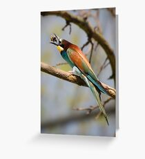 bee-eater Greeting Card