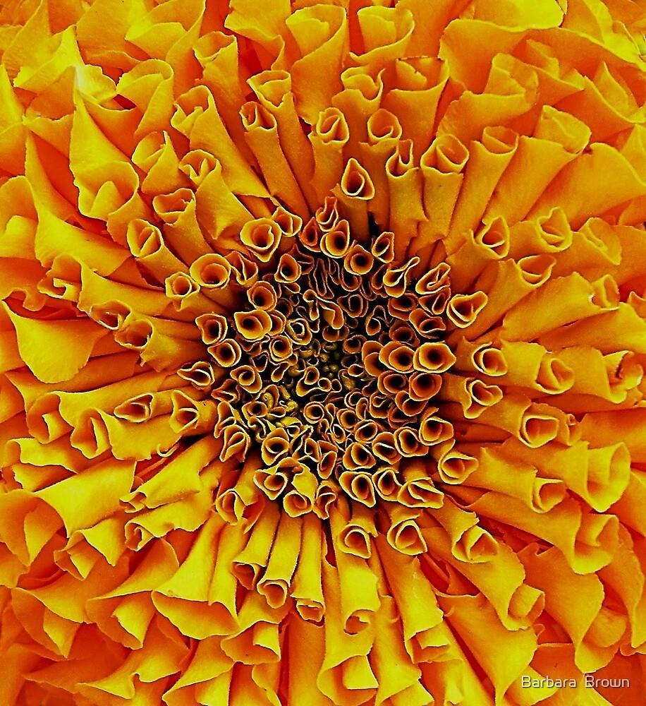Floral Patterns by Barbara  Brown