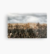 after the fire lennox head  Metal Print