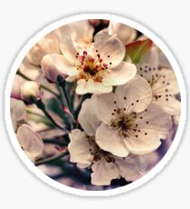 Blossoms at Dusk  Sticker