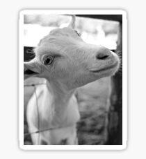Goofy Goat Sticker