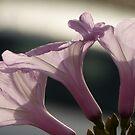como seda en luz del sol by Bernhard Matejka
