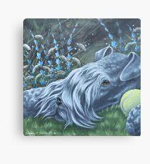 Kerry Blue Canvas Print