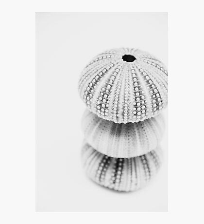 3 Sea Urchin Photographic Print