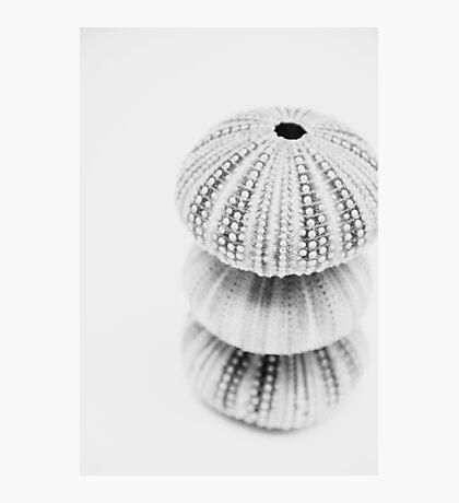 3 Sea Urchin Photographic Print