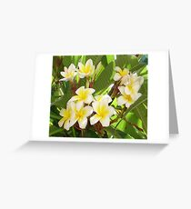 White and Yellow Frangipani Flowers with Leaves in Background  Greeting Card