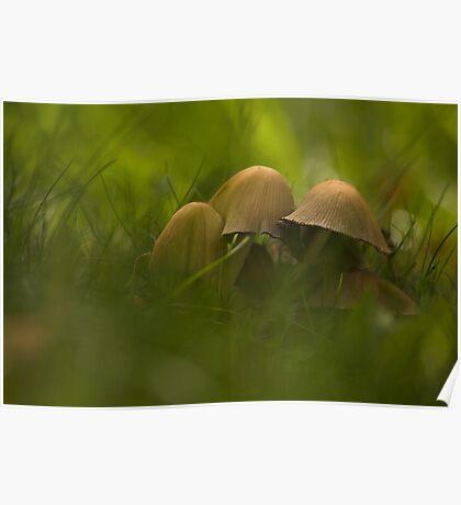 Mushrooms-1 Poster