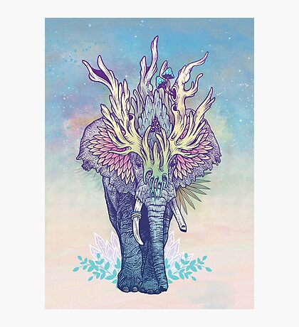 Spirit Animal - Elephant Photographic Print