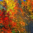 Splash of Autumn ! by Elfriede Fulda