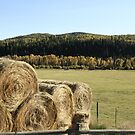 Hay by Andrea Kennedy