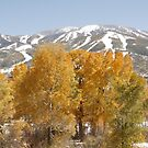 Late fall in Steamboat by Andrea Kennedy