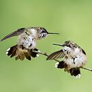 Feisty Hummers by Bonnie T.  Barry