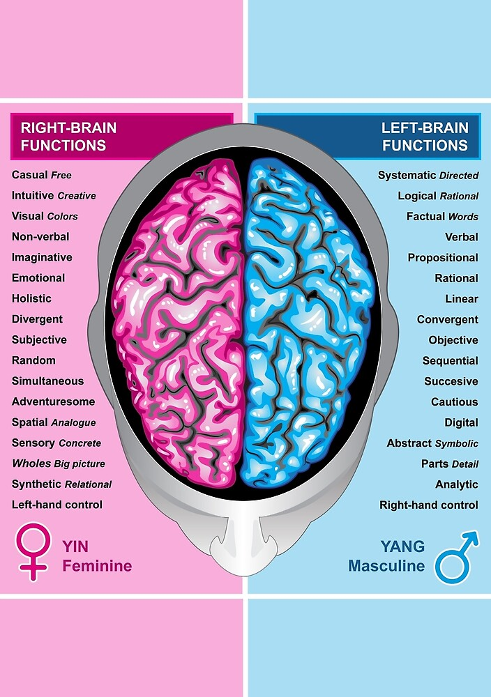 Human brain left and right functions vector by MEDUSA GraphicART