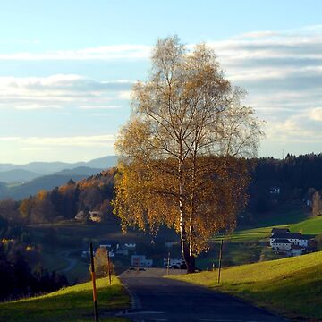 Tree, road and indian summer evening II | landscape photography by patrickjobst
