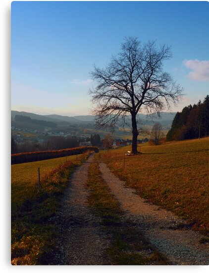 Tree, trail and indian summer evening   landscape photography by Patrick Jobst