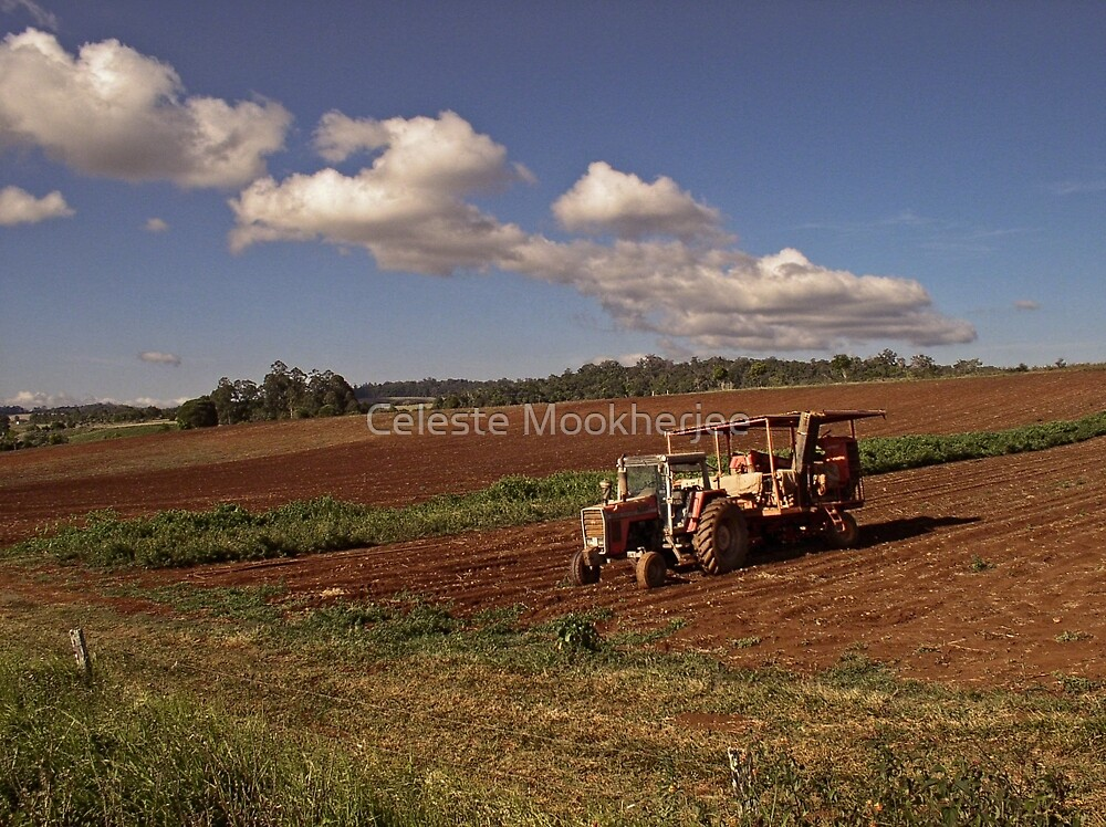 Farm on Atherton Tableland by Celeste Mookherjee
