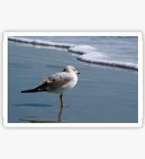 Textured Seagull Sticker