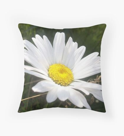 Close Up of a Margarite Daisy Flower Throw Pillow