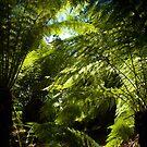 ferns by Glen Johnson