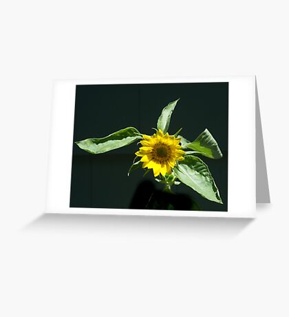 Sunflowers Greeting Card