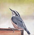 Red Breasted Nuthatch by Charlotte Yealey