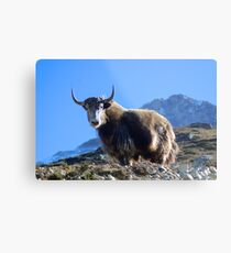 Himalayan Yak Everest Region Nepal Metal Print