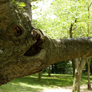 The Face on the tree by hernac10