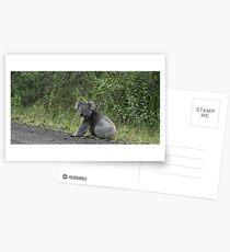 Koala | Blanket Bay Postcards