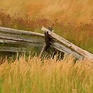 Bucolic Fence by sundawg7