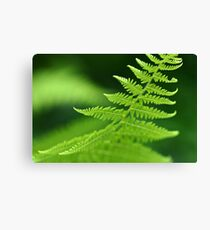 Fern Macro Canvas Print