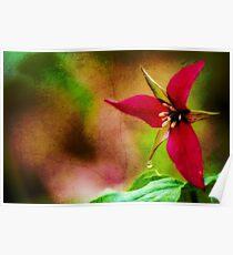 Ohio Wild Trillium  Poster