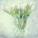 tulips by lucyliu