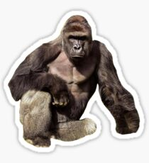 RIP HARAMBE ! GONE BUT NOT FORGOTTEN  Sticker