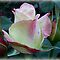 VOUCHER **Two Tone Rose Bud** for **Gorgeous Flower Cards** Challenge